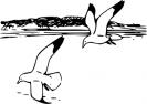 herring_gulls
