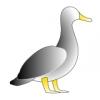 jonathon_s_duck_01