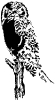 Owl_bold_graphic