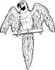 parrot_2