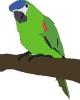 parrot_large