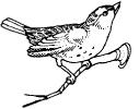 sm_bird