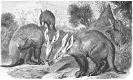 aardvark_drawing