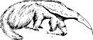 anteater_2