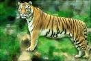 artsy_tiger