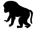 baboon_contour