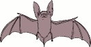 bat_big_eared
