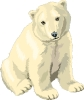 bear_polar_2