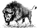 buffalo_4