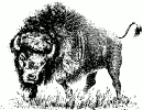 buffalo_sketch