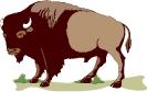 buffalo_USGS