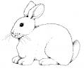 bunny_BW