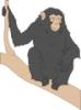 Chimp_02