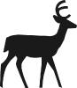 deer_bold