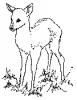 deer_fawn_BW