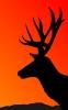 deer_siloette