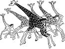 giraffes_running