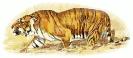 hunting_tiger