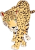 Jaguar_2