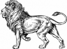 Lion_BW_sketch