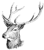 Red_deer_head
