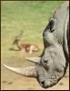 rhino_photo