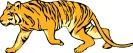 tiger_5