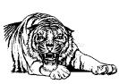 tiger_mad