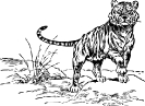 tiger_walking_sketch