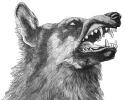 wolf_head