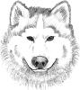 wolf_head_sketch