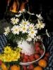 fruit foto_11