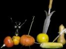 fruit foto_16