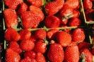 fruit foto_24