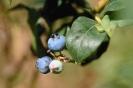 fruit foto_25