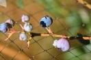 fruit foto_26