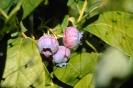 fruit foto_27