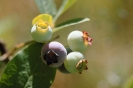 fruit foto_29
