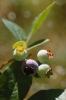 fruit foto_30