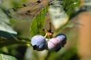 fruit foto_31