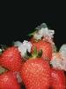 fruit foto_36