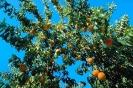 fruit foto_5