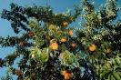 fruit foto_6