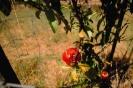 fruit foto_9
