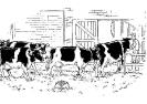 koeien-82
