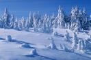 foto winter_117