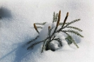 foto winter_118
