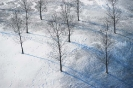 foto winter_11