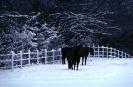foto winter_12