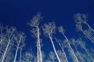foto winter_132